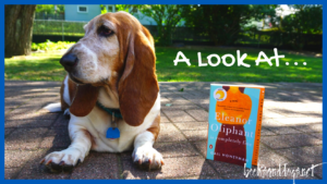 Eleanor Oliphant contemporary women's fiction book and a basset hound