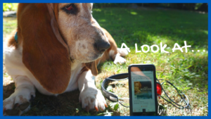 The Shifting Fog, audiobook, historical women's fiction, and a basset hound